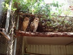 Cool looking owls, Featherdale Wildlife Park