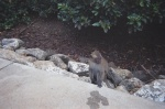 Monkey on sidwalk