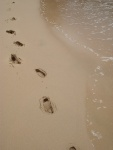 The only footprints, Balding Bay, Magnetic Island